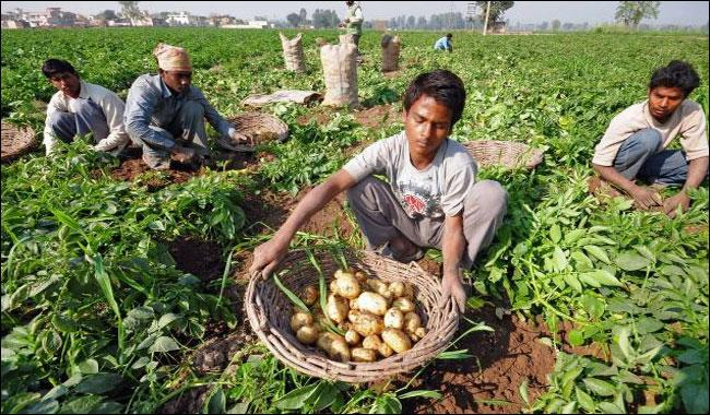 Indian growers demand export of potato to Pakistan, warn of agitation