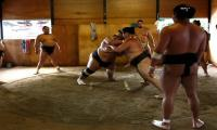 Getting to grips with sumo