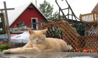 Alaska town's purr-fect unofficial cat mayor dies at 20