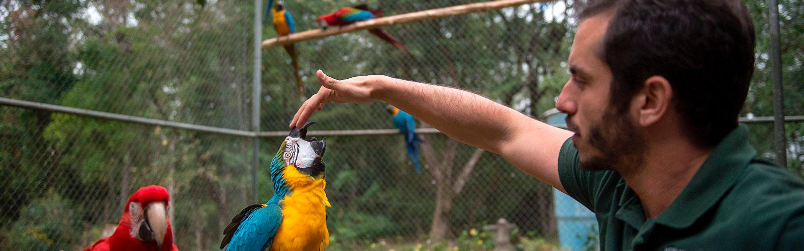 Birds learn how to fly again at Brazil rehab center