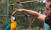 Birds learn how to fly again at Brazil rehab center