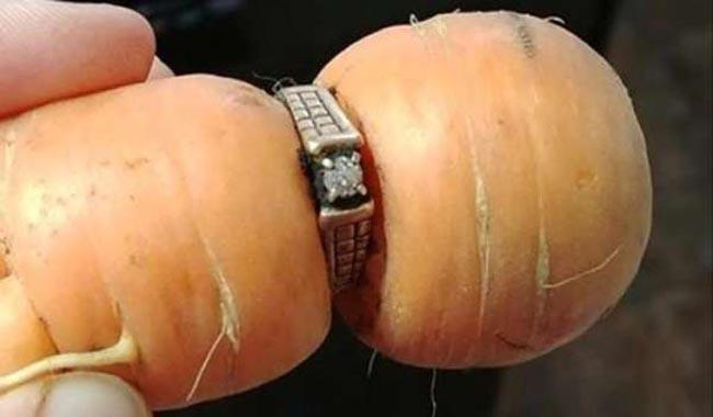 Long-lost ring reemerges...on a carrot