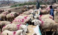 Federal govt announces 4 Eid ul Azha holidays