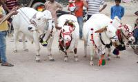 Eid ul Azha to be celebrated in Pakistan on Sep 2