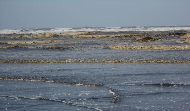 WWF-Pakistan raises concerns about oil spillage at Clifton beach