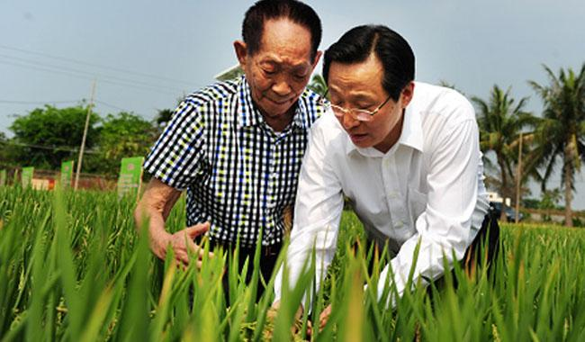 Hybrid rice scientists from China arrives to train 30 local scientists