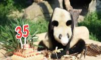 Zoo in China throws birthday party for celebrity