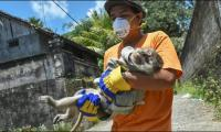Volunteers in action to rescue animals from volcano threats in Indonesia