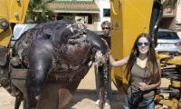 Giant dead turtle on Spanish beach