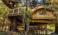 Microsoft builds tree-house workspaces for its employees