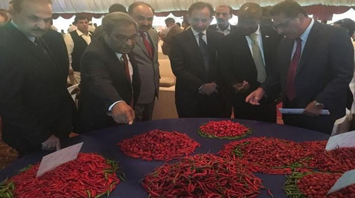 USAID helping boost Pakistan's chili production