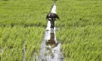 As rains grow erratic, Pakistan taps irrigation to protect Punjab crops