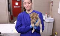Lion cubs receive first physical check up