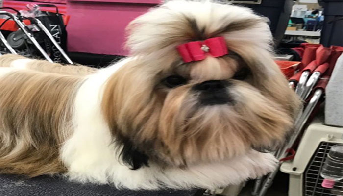 Rosemont Illinois Dog Show