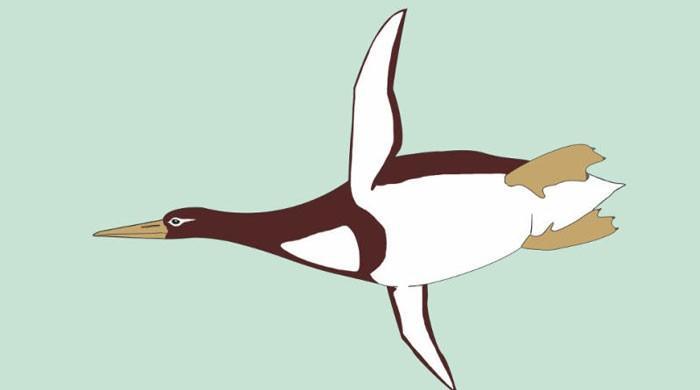 'Monster bird' fossil found in New Zealand