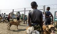 Dogs shielding S.Africa´s youth from township violence