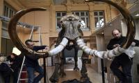 Mammoth skeleton sells for nearly 550,000 euros at French auction