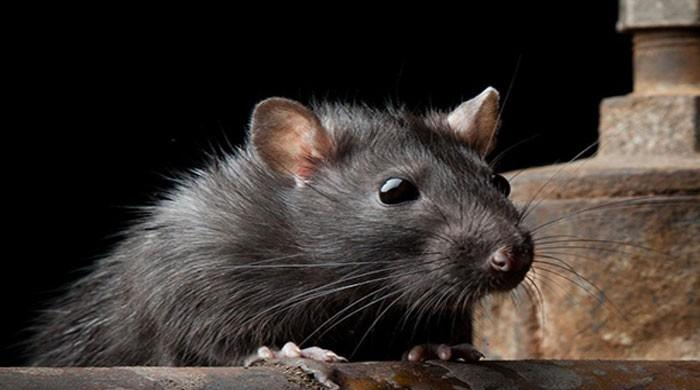 Mouse study shows how alcohol may cause cancer