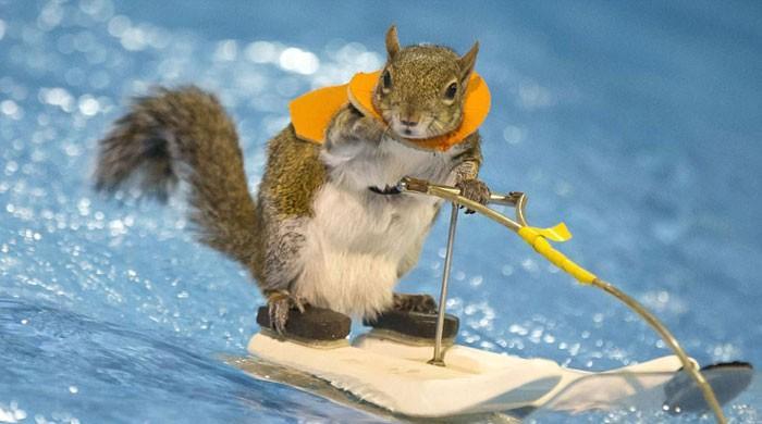 温暖的滑水松鼠特技
