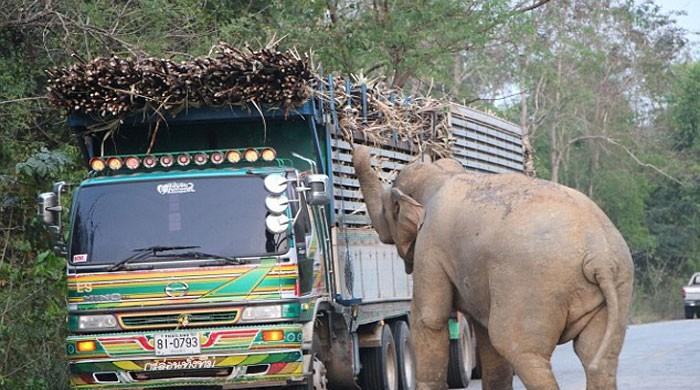 Elephant causes massive traffic jam in Thailand
