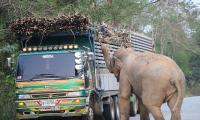 Elephant causes massive traffic jam in Thailand