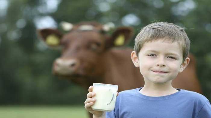 Kids allergic to cow's milk may have lower weight, height