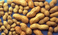 How immune cells respond to peanuts in allergic mice