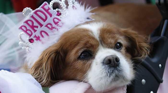 Move over corgis, Meghan´s beagle joins the British royal family
