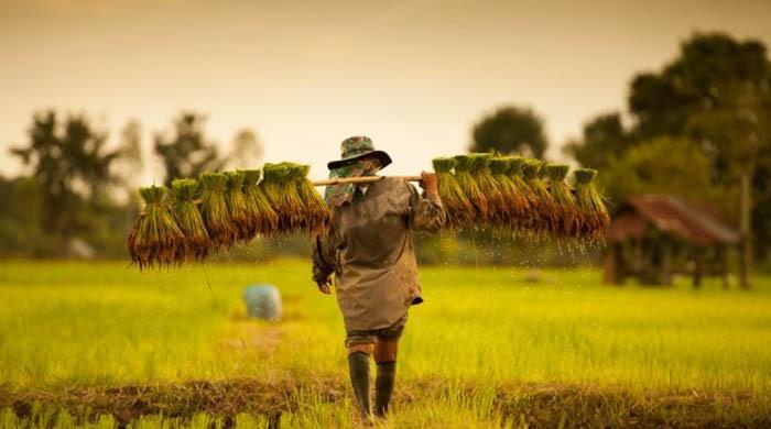 Ricult raises $1.85m to improve smallholder farmer profitability with digital tech platform