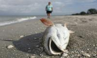 ´Devastating´ dolphin loss in Florida red tide disaster
