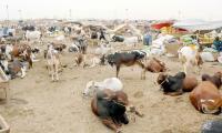 Eid-ul-Azha: Government refuses to revise Eid holidays