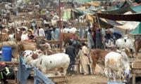 Eid-ul-Azha: Four Eid holidays in Sindh