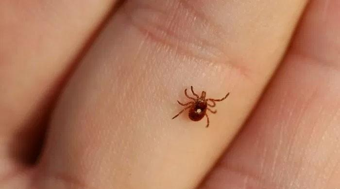 One more case of Congo virus surfaces in Karachi