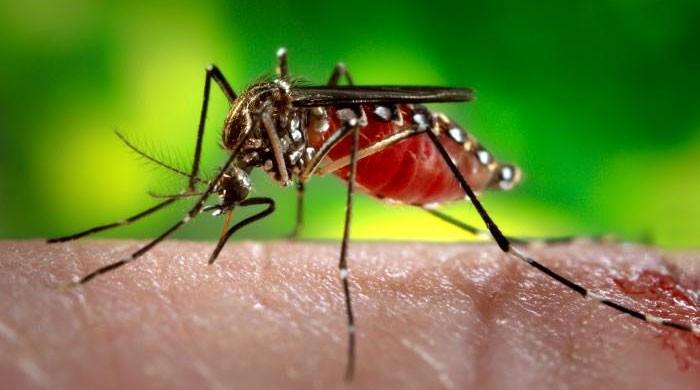 India on alert as zika virus hits tourism hotspot of Jaipur