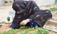 New strategies being used for improving agriculture in Balochistan