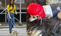 Priyanka Chopra gets Rs3.6 million jacket for her dog