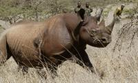 Rhino poacher crushed by elephant, devoured by lions in S.Africa