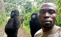 Selfie with two gorillas in Congo goes viral