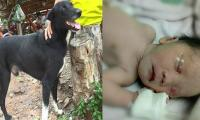 Hero dog saves buried baby in northeastern Thailand