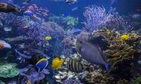 Climate change on track to reduce ocean wildlife by 17%