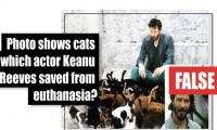 Fact-check: Is this a photo of cats actor Keanu Reeves saved from euthanasia?