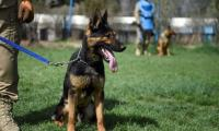 Man´s best friend: The dogs who sniff out explosives in Kabul