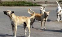 Pakistani lawmaker proposes export of stray dogs to China, Philippines