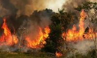 Wildfires surge in Brazil's Amazon rainforest as deforestation accelerates