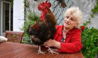 French rooster triumphs in battle over right to crow