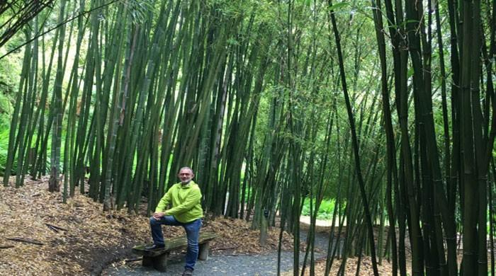 2019 International Bamboo Industry Fair to kick off in Sichuan