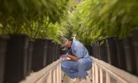 Australia to back cannabis research to help cancer patients