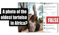 Fact-check: A photo of the oldest tortoise in Africa?