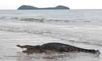 Killer crocodiles: Why are more humans being attacked in East Timor?