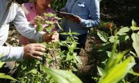 Scientists search the wild for food plant genes